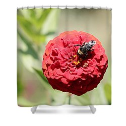Bumble Bee On Zinnia Shower Curtain