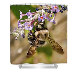 Bumble Bee Up Close And Personal Shower Curtain