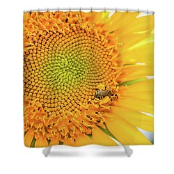 Bumble Bee With Pollen Sacs Shower Curtain