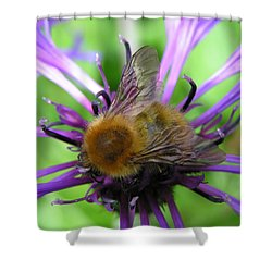 Bumblebee In Blue Shower Curtain