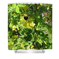 Bumblebee In Flight In Yellow Flowers Shower Curtain by Barbara Yearty