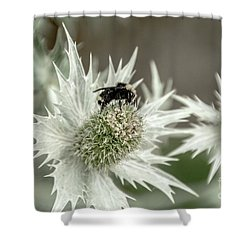 Bumblebee On Thistle Flower Shower Curtain
