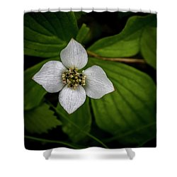 Shower Curtain featuring the photograph Bunchberry Dogwood On Gloomy Day by Darcy Michaelchuk