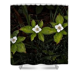 Bunchberry Flowers Shower Curtain