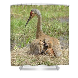 Bunk Mates Shower Curtain by Jim Gray
