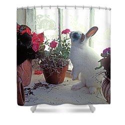 Bunny In Window Shower Curtain