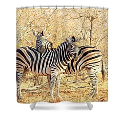 Burchells Zebras Shower Curtain by Betty-Anne McDonald
