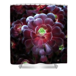 Burgundy Succulenta Shower Curtain
