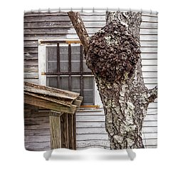 Burl And Window Shower Curtain