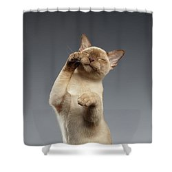 Burma Cat Paws Snout Covers On Gray Shower Curtain
