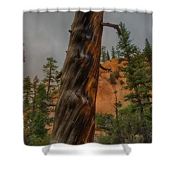 Burned Shower Curtain