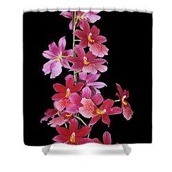 Burrageara Nelly Isler, Swiss Beauty Shower Curtain