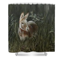 Burro In The Wild Shower Curtain