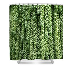 Burro's Tail Hanging Plant Shower Curtain