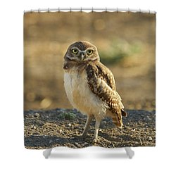 Burrowing Owl #6 Shower Curtain by Doug Herr