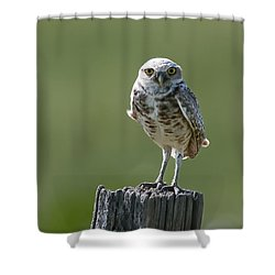 Shower Curtain featuring the photograph Burrowing Owl by Gary Lengyel