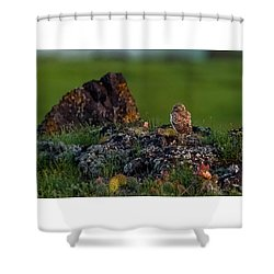Shower Curtain featuring the photograph Burrowing Owl In Cactus #1 by Yeates Photography