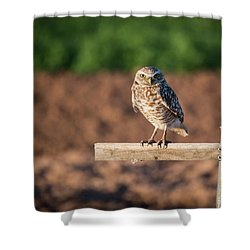 Burrowing Owl On A Perch Shower Curtain