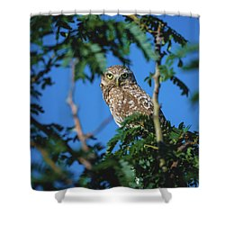 Burrowing Owl Sitting In A Tree Shower Curtain