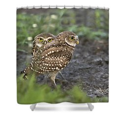Burrowing Owl Twins Shower Curtain
