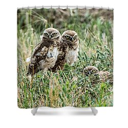 Shower Curtain featuring the photograph Burrowing Owlets Near Barr Lake by Stephen  Johnson
