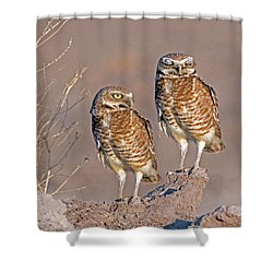 Burrowing Owls At Salton Sea Shower Curtain