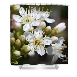 Shower Curtain featuring the photograph Burst Of Spring by Anita Oakley