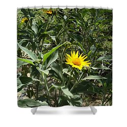 Burst Of Sun Flower Shower Curtain