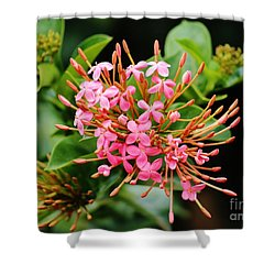 Shower Curtain featuring the photograph Bursting Forth by Craig Wood