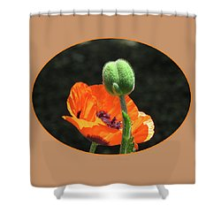 Bursting Forth - Poppy And Bud - Oval Center Mat Shower Curtain