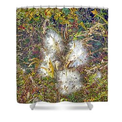 Bursting Milkweed Seed Pods Shower Curtain by Constantine Gregory