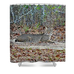 Shower Curtain featuring the photograph Bushed Bobcat by Al Powell Photography USA
