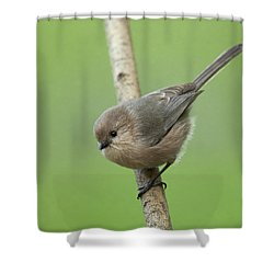 Bushtit Shower Curtain