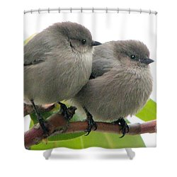 Bushtits Shower Curtain