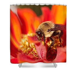 Busy Bee II Shower Curtain by Greg Graham