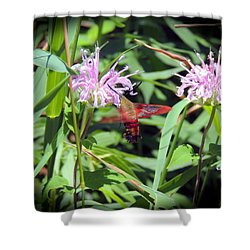 Shower Curtain featuring the photograph Busy Hummingbird Moth by Teresa Schomig
