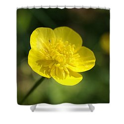 Shower Curtain featuring the photograph Butter by Heidi Poulin