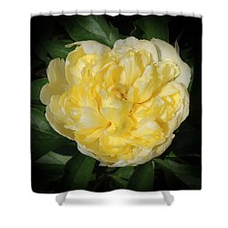 Buttercream Peony Shower Curtain