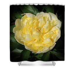 Buttercream Peony Shower Curtain by Teresa Schomig