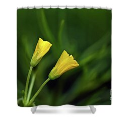 Buttercup Babies Shower Curtain by Lois Bryan