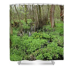 Buttercups In Wetlands Shower Curtain by Michal Boubin
