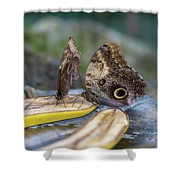 Shower Curtain featuring the photograph Butterflies Eating Bananas by Raphael Lopez