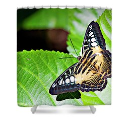Butterfly 13a Shower Curtain