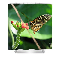 Shower Curtain featuring the photograph Butterfly 2 by Michael Krek