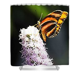 Butterfly 2 Shower Curtain by Tom Prendergast
