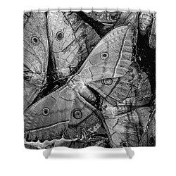 Butterfly #2056 Bw Shower Curtain