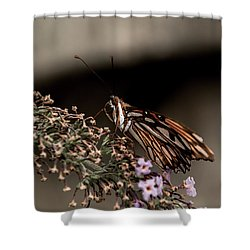 Shower Curtain featuring the photograph Butterfly 4 by Jay Stockhaus
