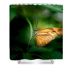 Shower Curtain featuring the photograph Butterfly 5 by Jay Stockhaus