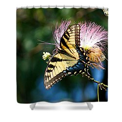 Butterfly A Shower Curtain