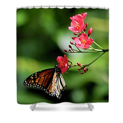 Butterfly And Blossom Shower Curtain